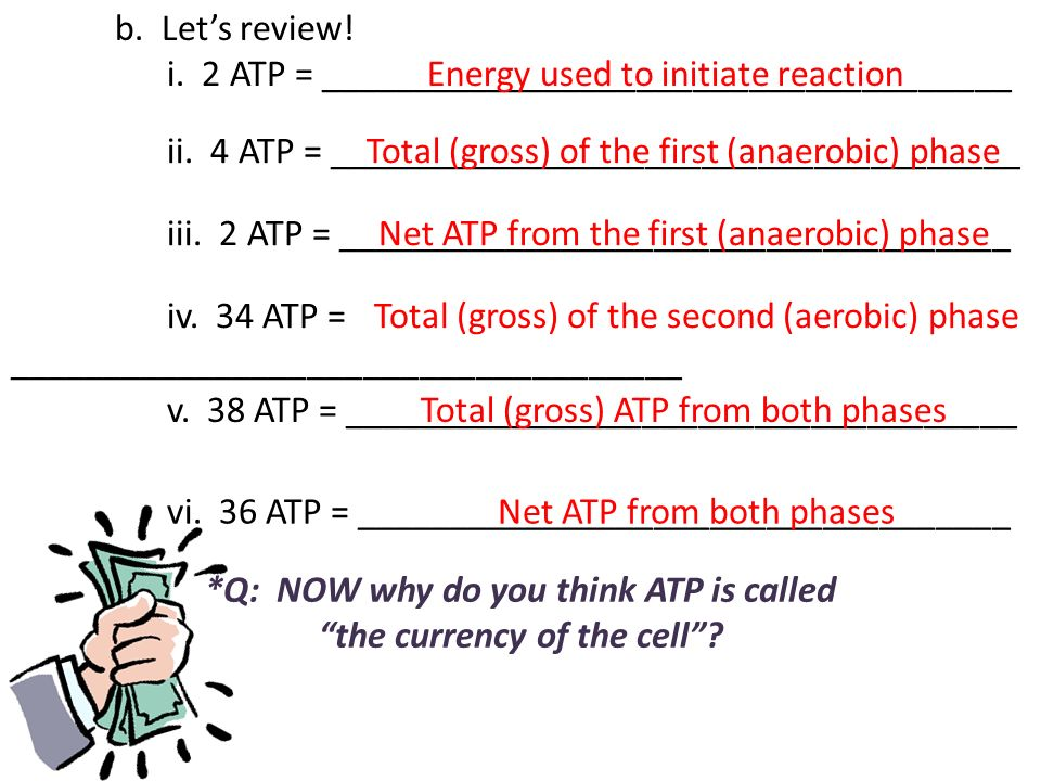 b. Lets review! i. 2 ATP = _____________________________________ ii. 4 ATP = _____________________________________ iii. 2 ATP = ______________________