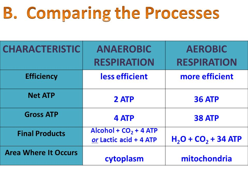 CHARACTERISTICANAEROBIC RESPIRATION AEROBIC RESPIRATION Efficiency Net ATP Gross ATP Final Products Area Where It Occurs less efficientmore efficient