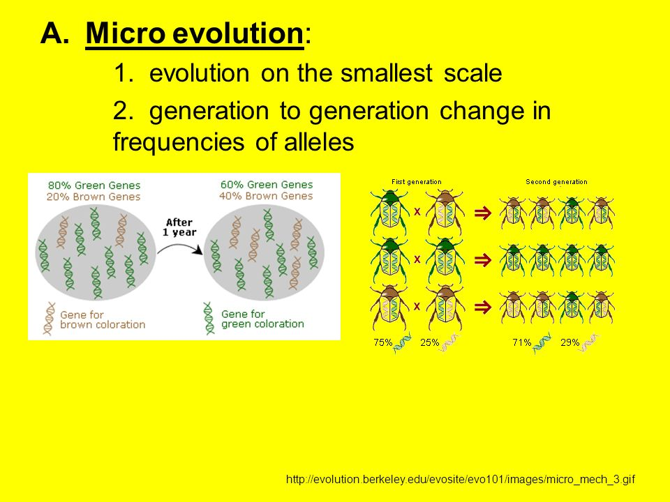 A.Micro evolution: 1. evolution on the smallest scale 2. generation to generation change in frequencies of alleles http://evolution.berkeley.edu/evosi
