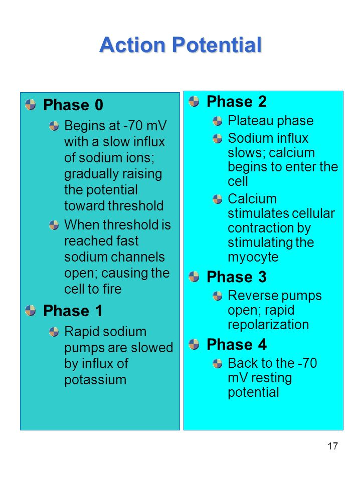17 Action Potential Phase 0 Begins at -70 mV with a slow influx of sodium ions; gradually raising the potential toward threshold When threshold is rea