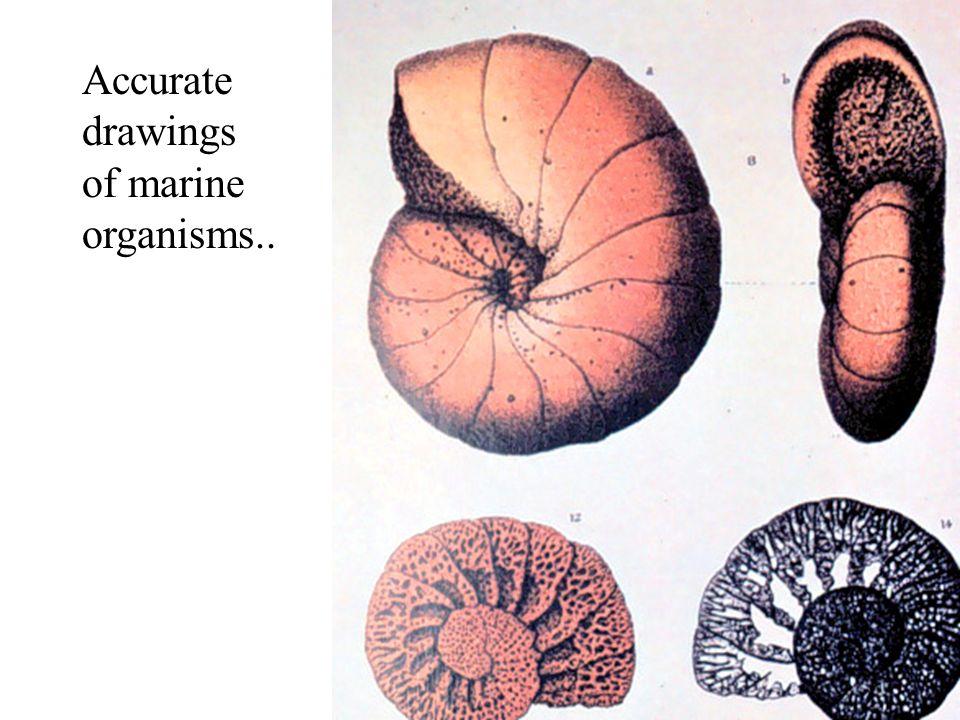 Accurate drawings of marine organisms..