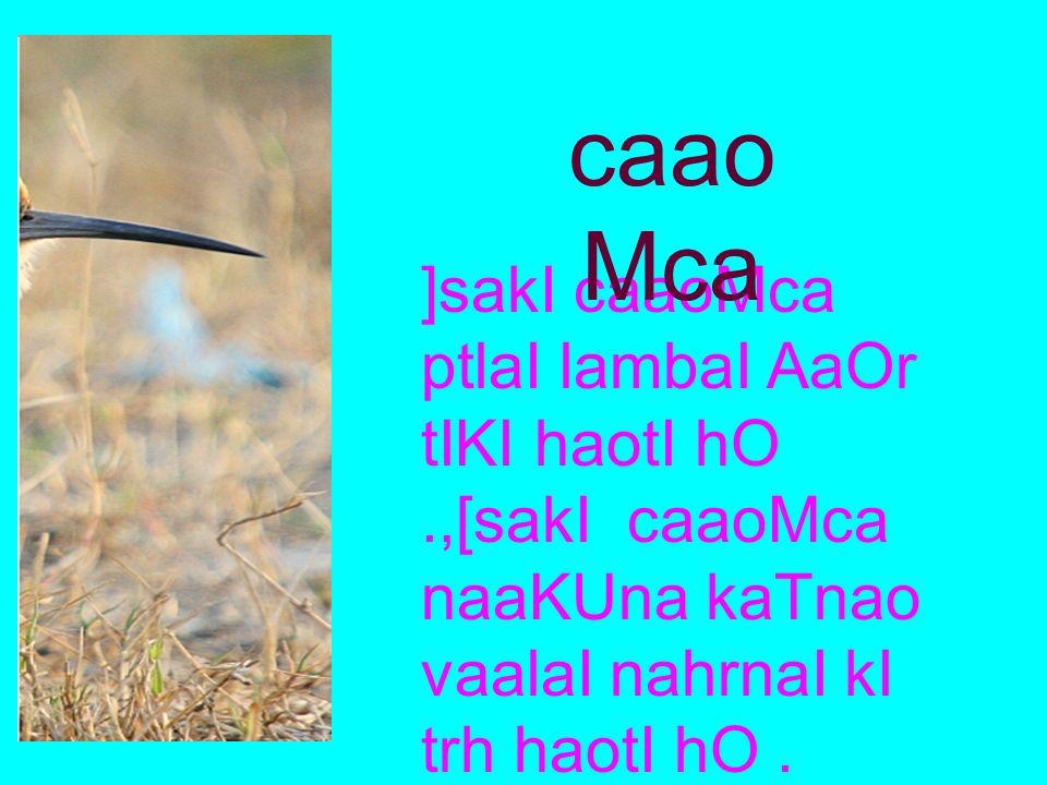 [sako pMK kaloa kalao haoto hOM ijana pr maaoTI maaoTI saf,od Qaairyaa^ haotI hOM. pMK