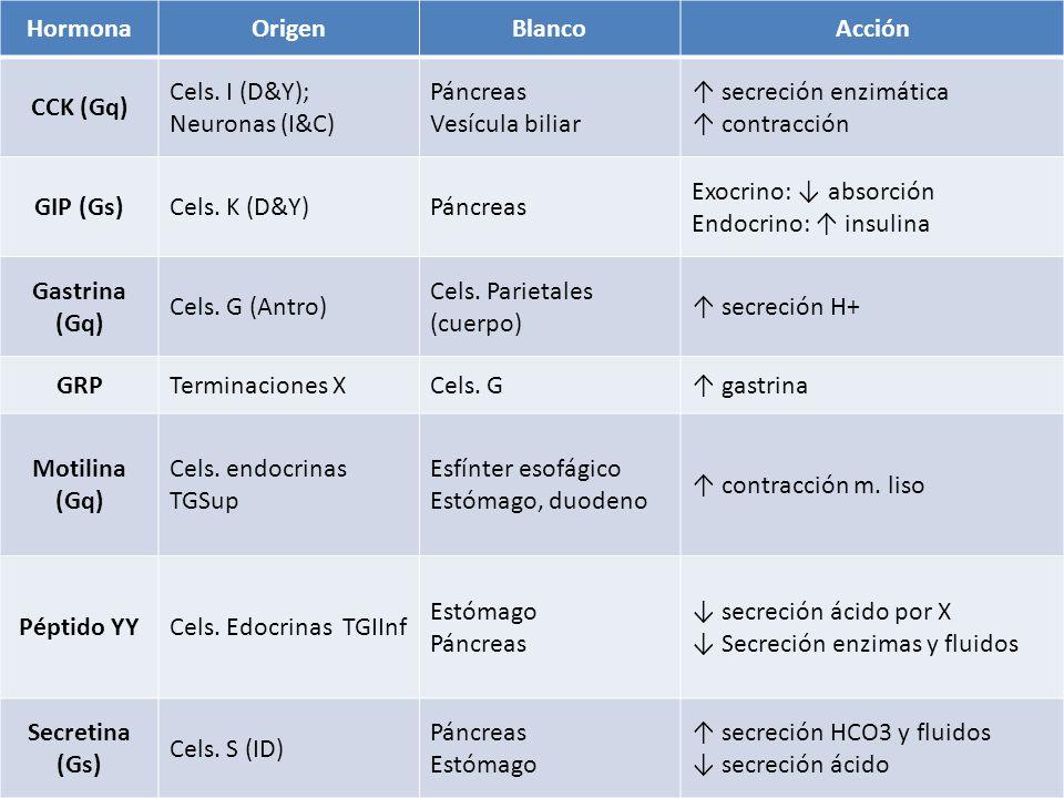 HormonaOrigenBlancoAcción CCK (Gq) Cels. I (D&Y); Neuronas (I&C) Páncreas Vesícula biliar secreción enzimática contracción GIP (Gs)Cels. K (D&Y)Páncre