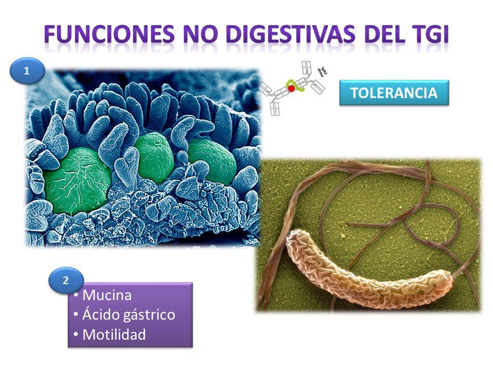 Mucina Ácido gástrico Motilidad Mucina Ácido gástrico Motilidad TOLERANCIA 1 1 2 2