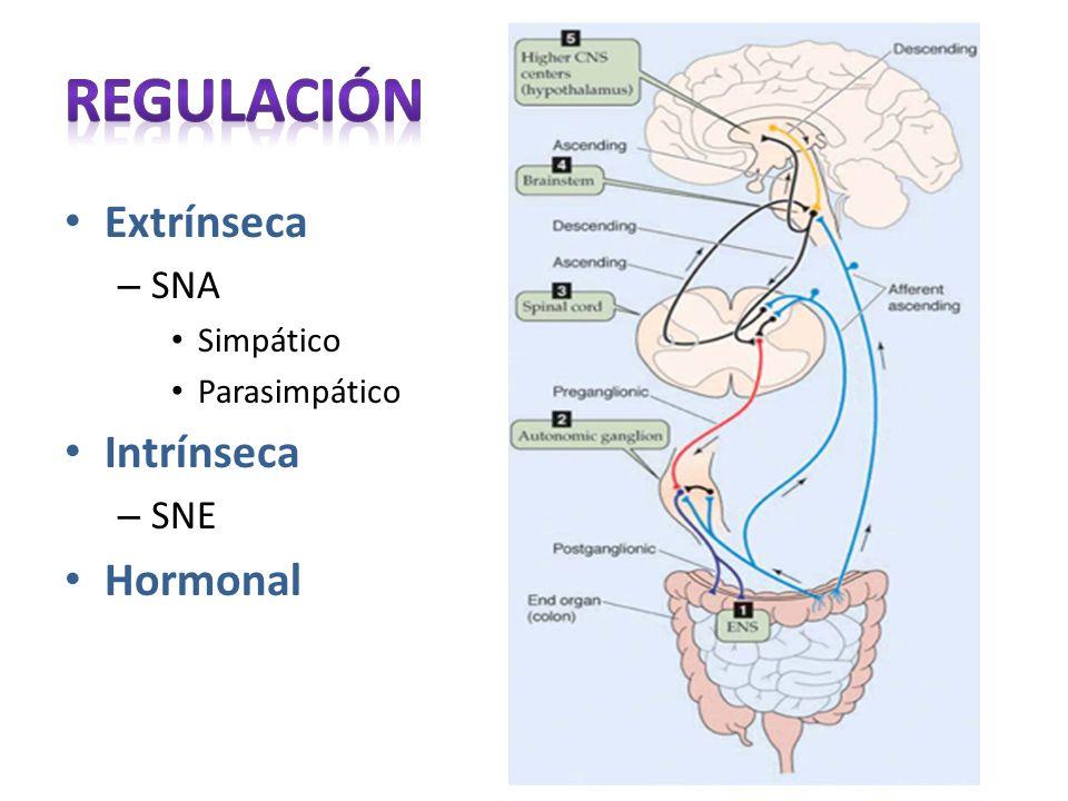 Extrínseca – SNA Simpático Parasimpático Intrínseca – SNE Hormonal