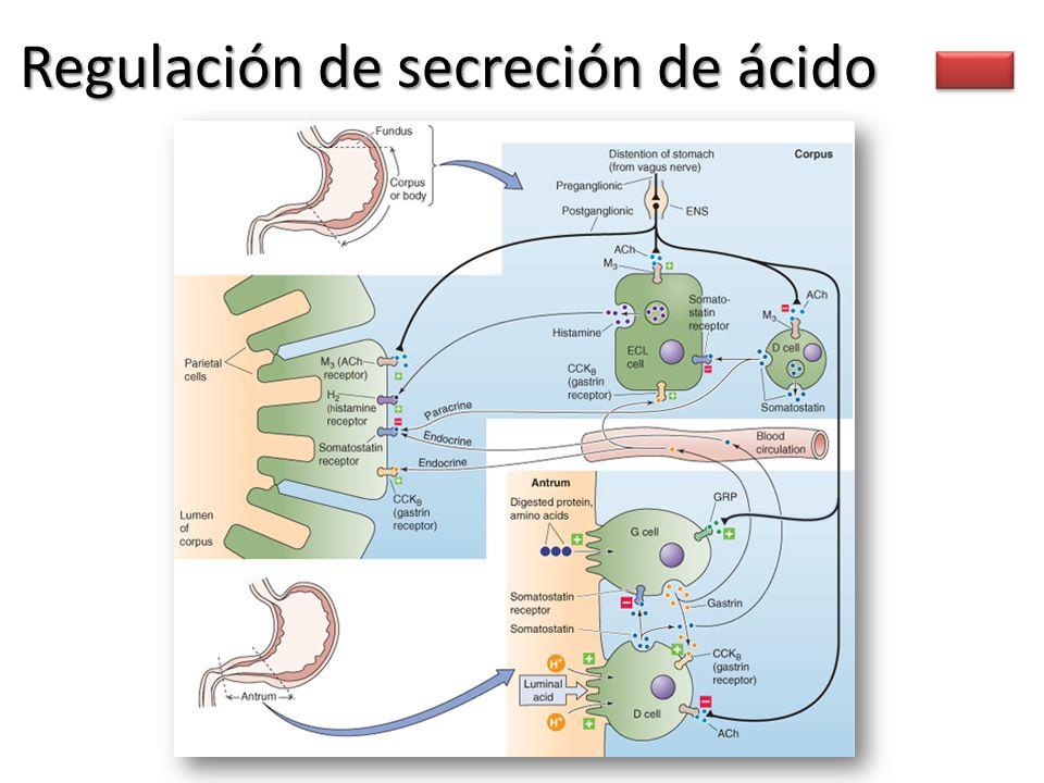 Regulación de secreción de ácido