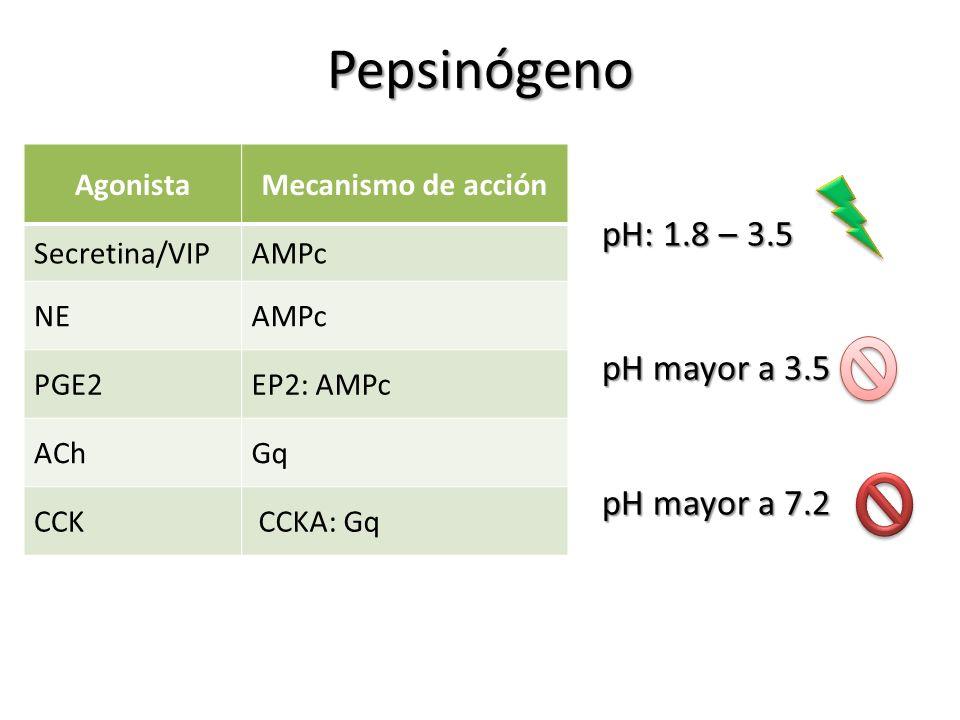 Pepsinógeno AgonistaMecanismo de acción Secretina/VIPAMPc NEAMPc PGE2EP2: AMPc AChGq CCK CCKA: Gq pH: 1.8 – 3.5 pH mayor a 3.5 pH mayor a 7.2