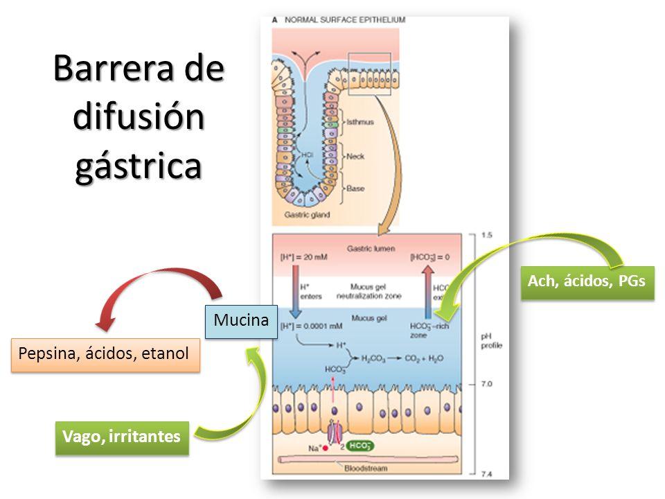 Barrera de difusión gástrica Pepsina, ácidos, etanol Mucina Vago, irritantes Ach, ácidos, PGs