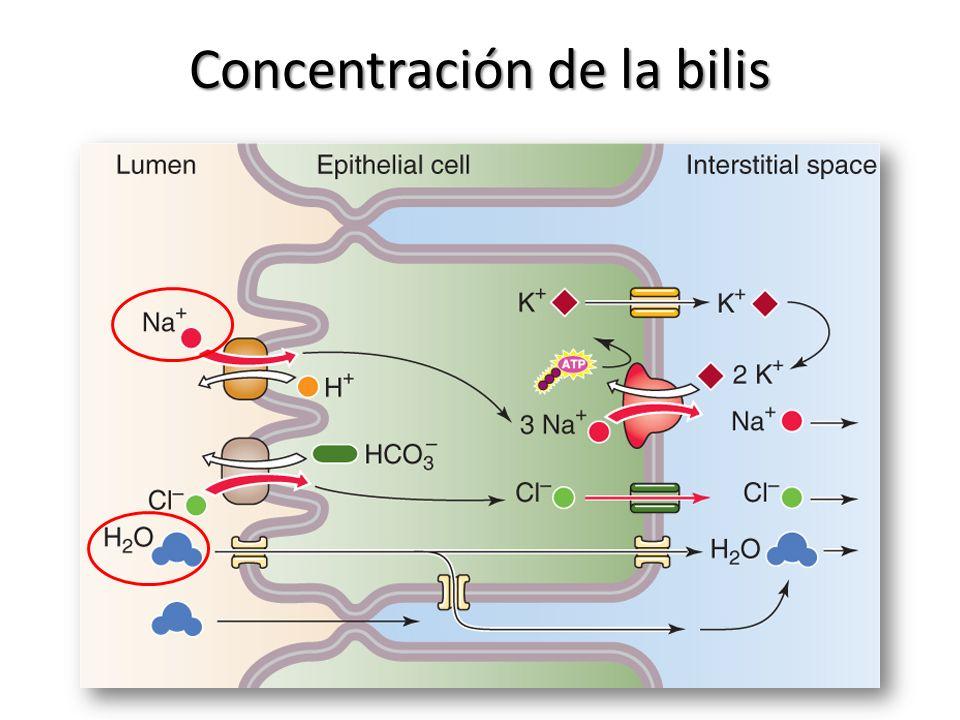 Concentración de la bilis