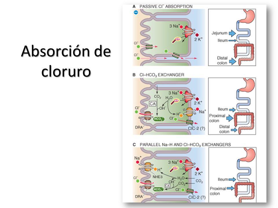 Absorción de cloruro