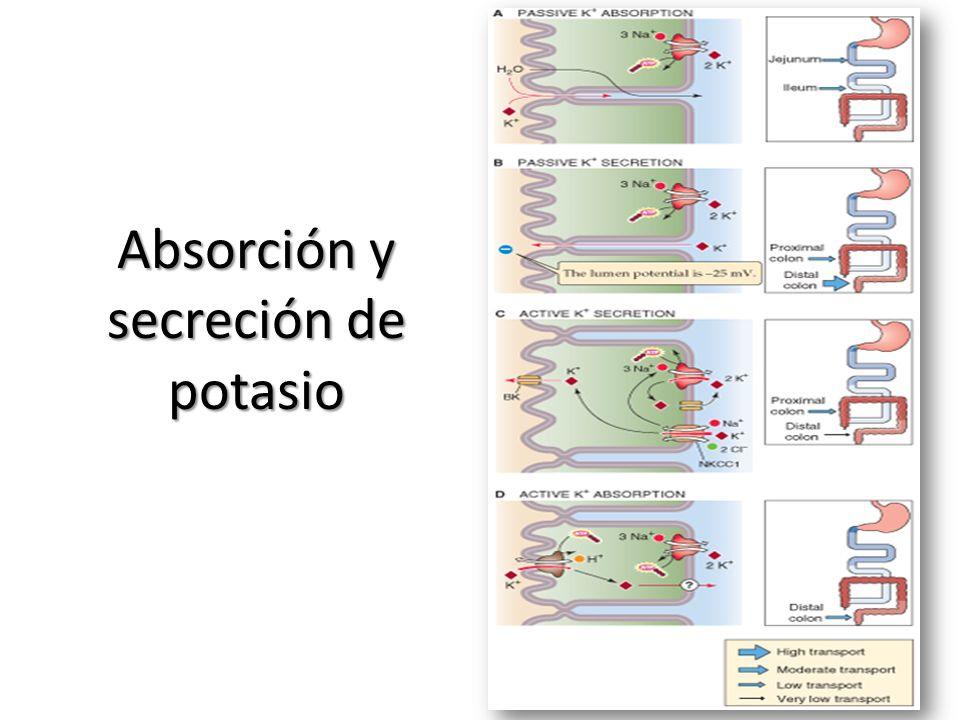 Absorción y secreción de potasio