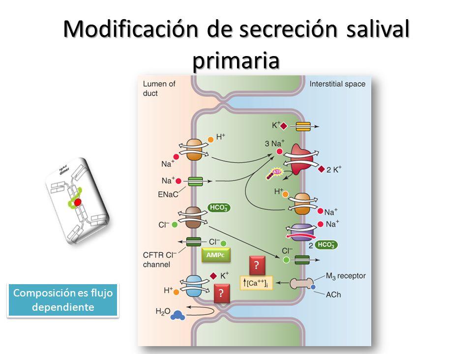 Modificación de secreción salival primaria ? ? ? ? AMPc Composición es flujo dependiente