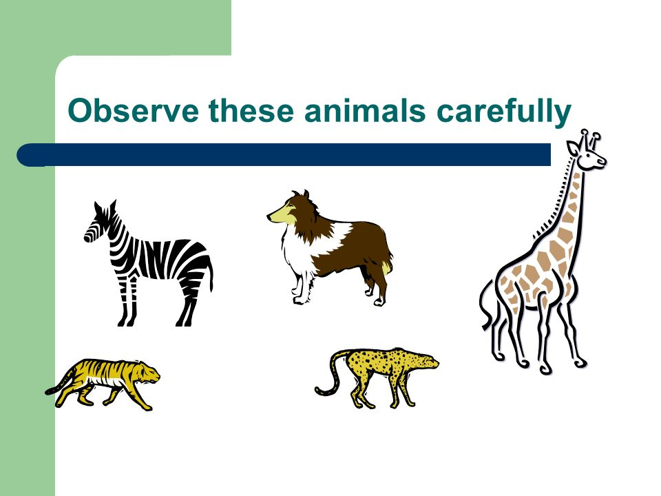 Observe these animals carefully
