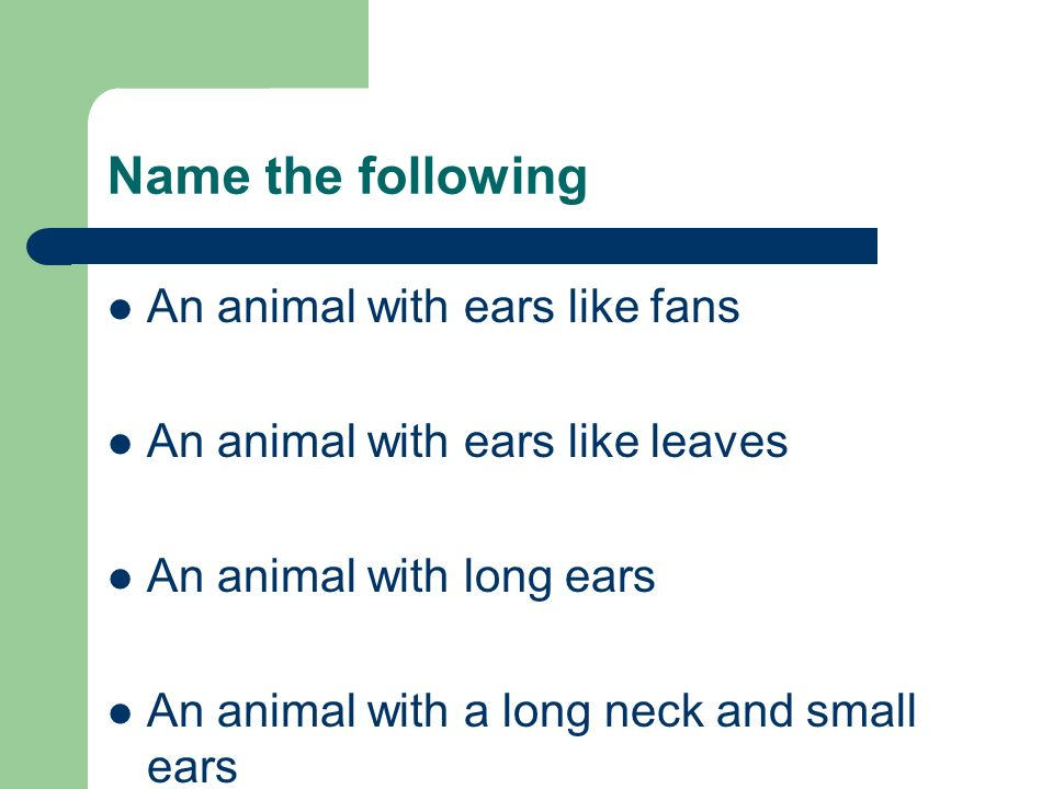 Name the following An animal with ears like fans An animal with ears like leaves An animal with long ears An animal with a long neck and small ears