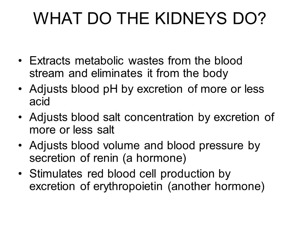 WHAT DO THE KIDNEYS DO? Extracts metabolic wastes from the blood stream and eliminates it from the body Adjusts blood pH by excretion of more or less