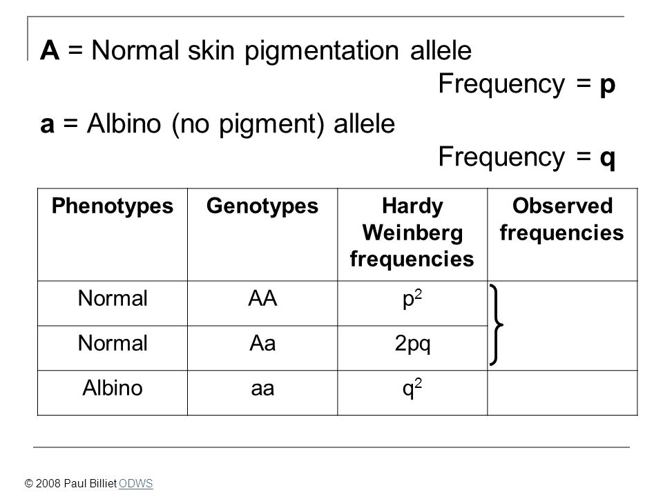 PhenotypesGenotypesHardy Weinberg frequencies Observed frequencies NormalAAp2p2 NormalAa2pq Albinoaaq2q2 A = Normal skin pigmentation allele Frequency