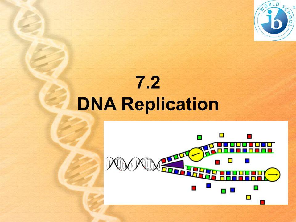7.2 DNA Replication