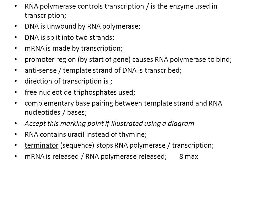 RNA polymerase controls transcription / is the enzyme used in transcription; DNA is unwound by RNA polymerase; DNA is split into two strands; mRNA is