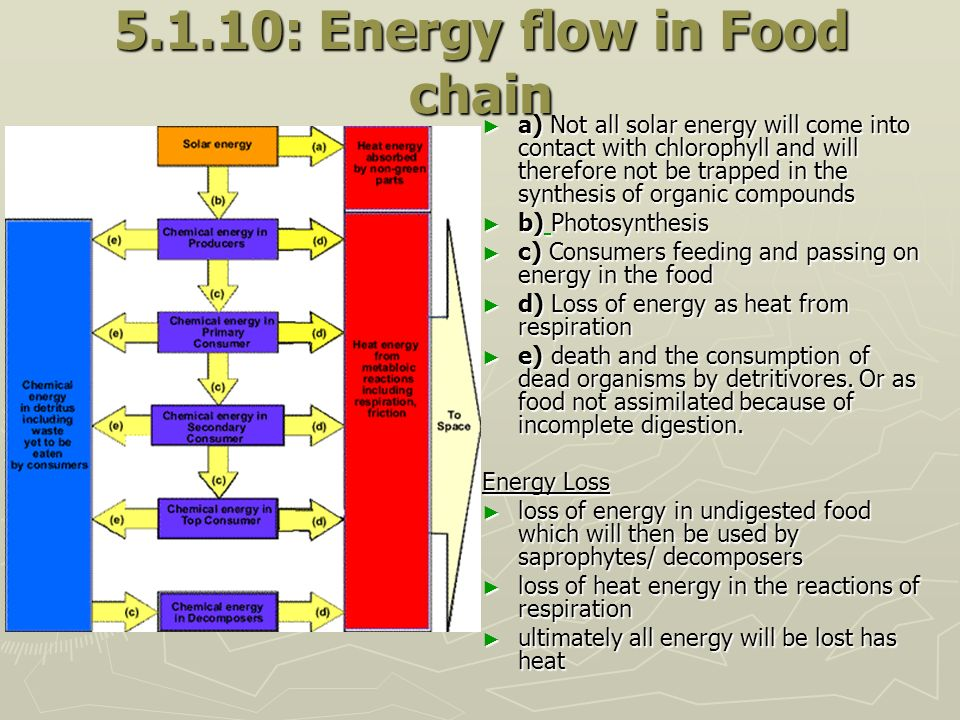 5.1.10: Energy flow in Food chain a) Not all solar energy will come into contact with chlorophyll and will therefore not be trapped in the synthesis o