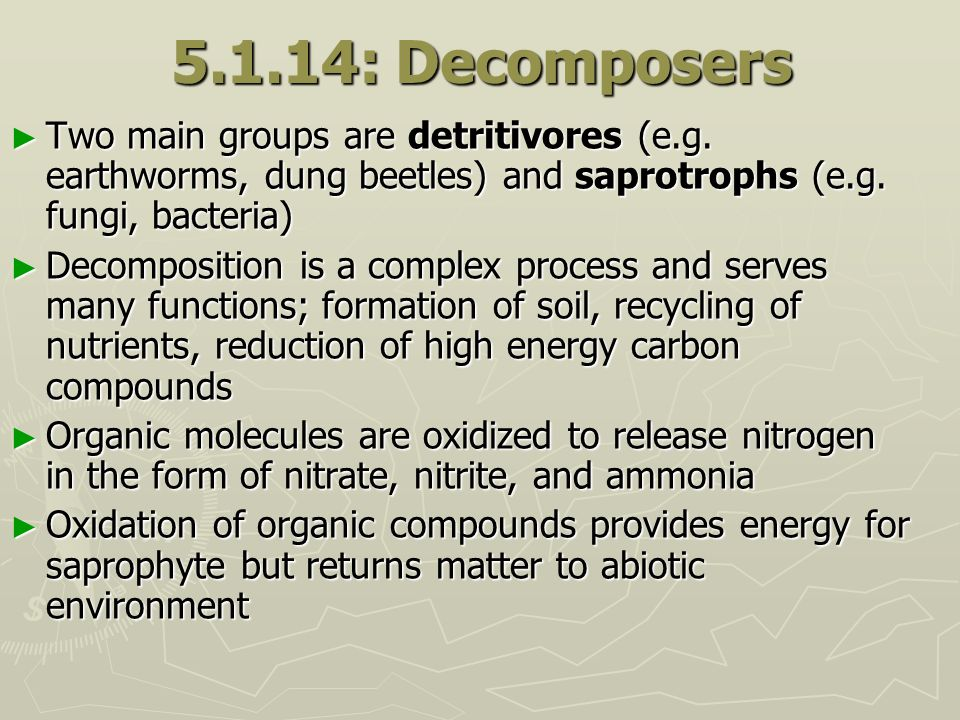 5.1.14: Decomposers Two main groups are detritivores (e.g. earthworms, dung beetles) and saprotrophs (e.g. fungi, bacteria) Two main groups are detrit