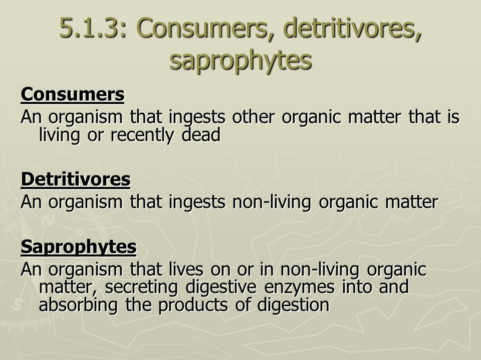 5.1.3: Consumers, detritivores, saprophytes Consumers An organism that ingests other organic matter that is living or recently dead Detritivores An or