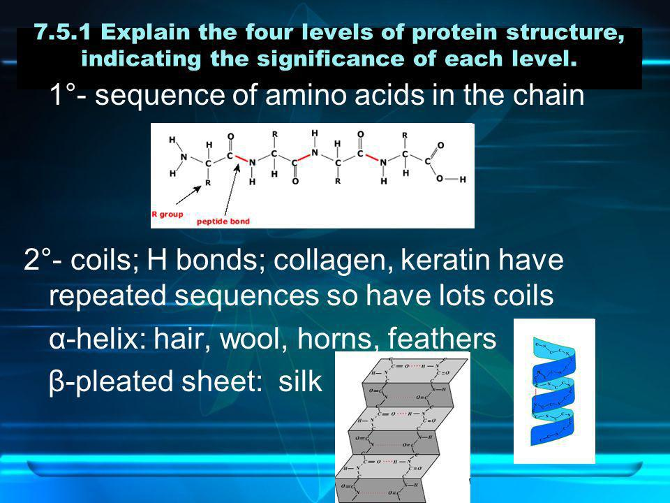 7.5.1 Explain the four levels of protein structure, indicating the significance of each level. 1°- sequence of amino acids in the chain 2°- coils; H b