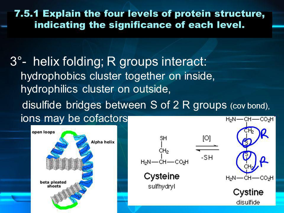 7.5.1 Explain the four levels of protein structure, indicating the significance of each level. 3°- helix folding; R groups interact: hydrophobics clus
