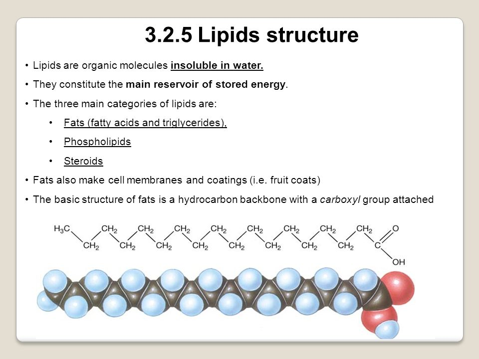 3.2.5 Lipids structure Lipids are organic molecules insoluble in water. They constitute the main reservoir of stored energy. The three main categories
