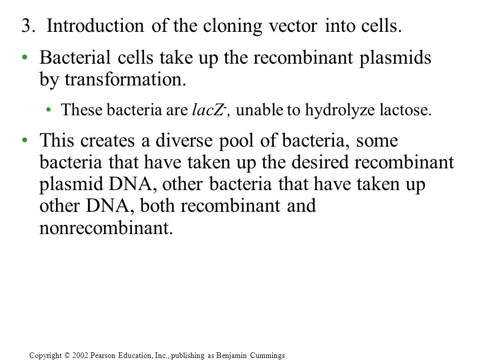 3. Introduction of the cloning vector into cells. Bacterial cells take up the recombinant plasmids by transformation. These bacteria are lacZ -, unabl