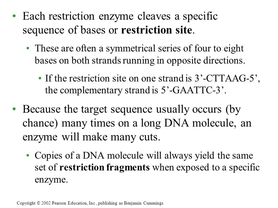 Each restriction enzyme cleaves a specific sequence of bases or restriction site. These are often a symmetrical series of four to eight bases on both
