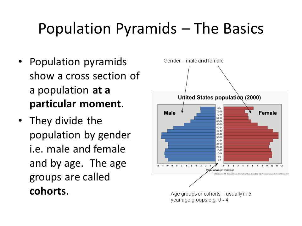 Population Pyramids – The Basics Population pyramids show a cross section of a population at a particular moment. They divide the population by gender
