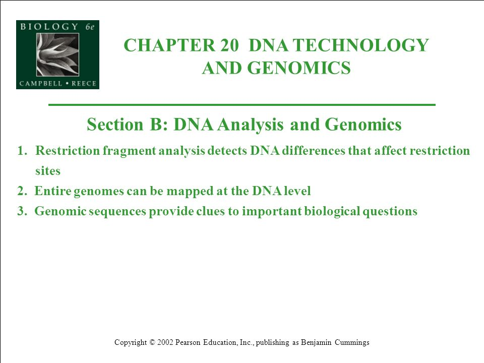 CHAPTER 20 DNA TECHNOLOGY AND GENOMICS Copyright © 2002 Pearson Education, Inc., publishing as Benjamin Cummings Section B: DNA Analysis and Genomics