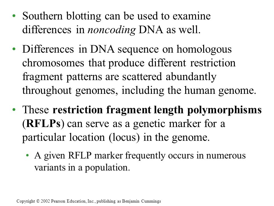 Southern blotting can be used to examine differences in noncoding DNA as well. Differences in DNA sequence on homologous chromosomes that produce diff