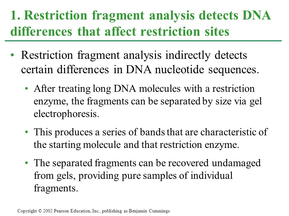 Restriction fragment analysis indirectly detects certain differences in DNA nucleotide sequences. After treating long DNA molecules with a restriction
