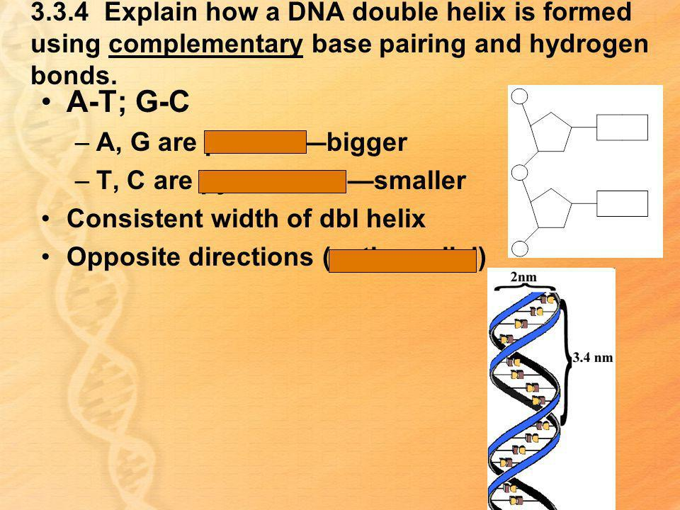 3.3.4 Explain how a DNA double helix is formed using complementary base pairing and hydrogen bonds. A-T; G-C –A, G are purinesbigger –T, C are pyrimid