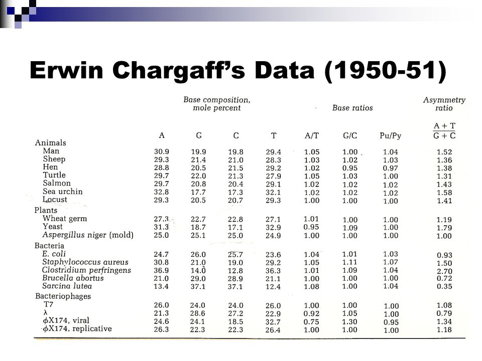 Erwin Chargaffs Data (1950-51)
