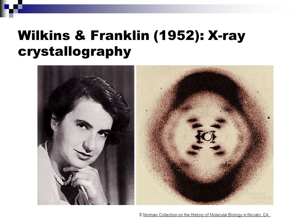 Wilkins & Franklin (1952): X-ray crystallography © Norman Collection on the History of Molecular Biology in Novato, CANorman Collection on the History