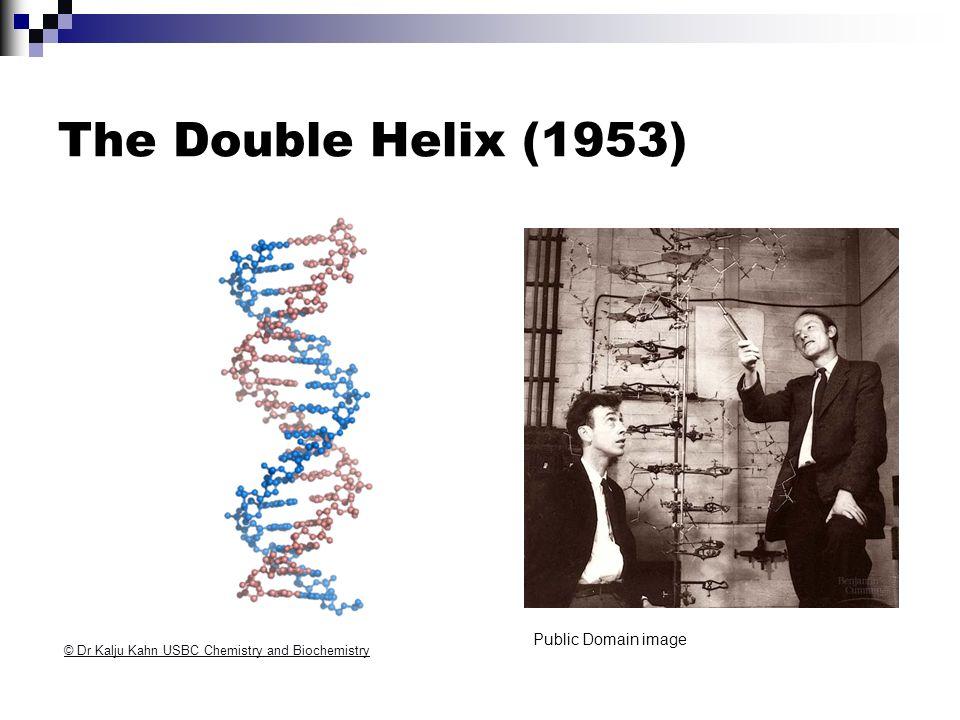 The Double Helix (1953) © Dr Kalju Kahn USBC Chemistry and Biochemistry Public Domain image