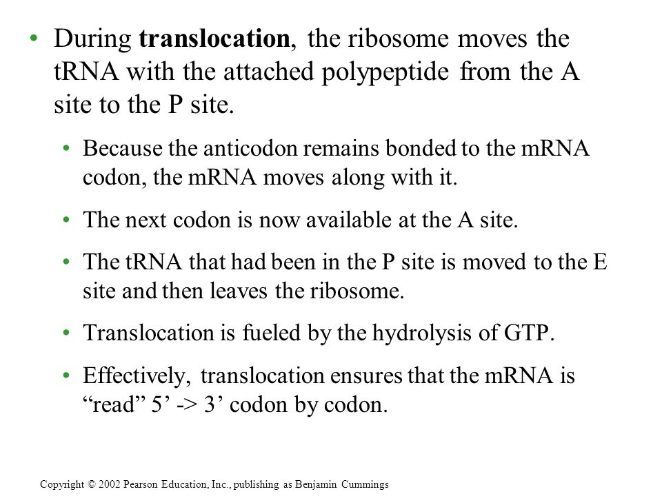 During translocation, the ribosome moves the tRNA with the attached polypeptide from the A site to the P site. Because the anticodon remains bonded to