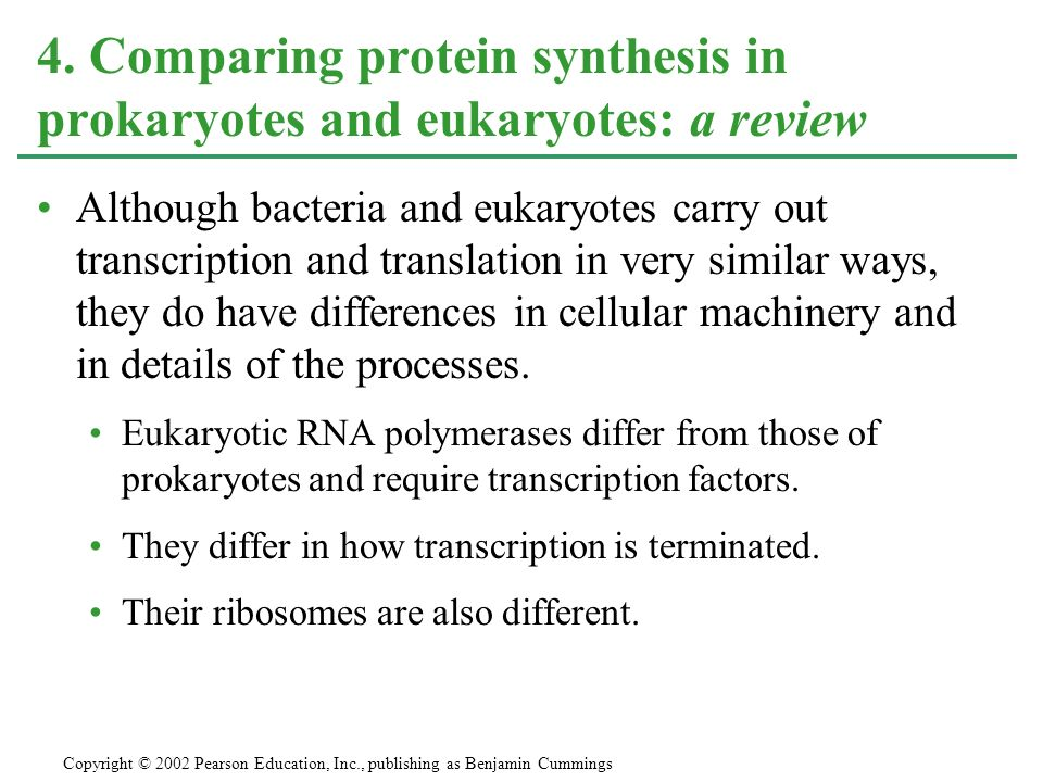 Eukaryotic Transcription And Translation Although Bacteria And Eukaryotes Carry Out Transcription And Translation in