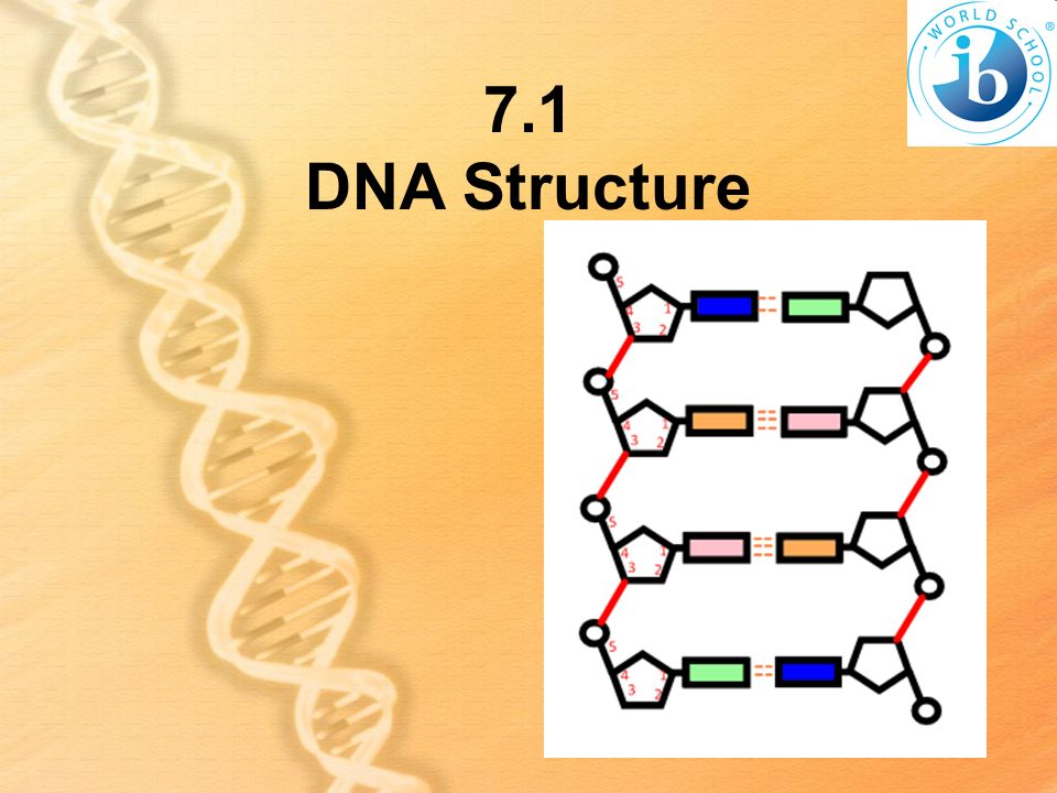 7.1 DNA Structure