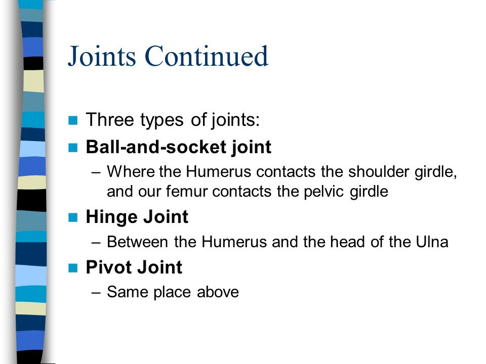 Joints Continued Three types of joints: Ball-and-socket joint –Where the Humerus contacts the shoulder girdle, and our femur contacts the pelvic girdl