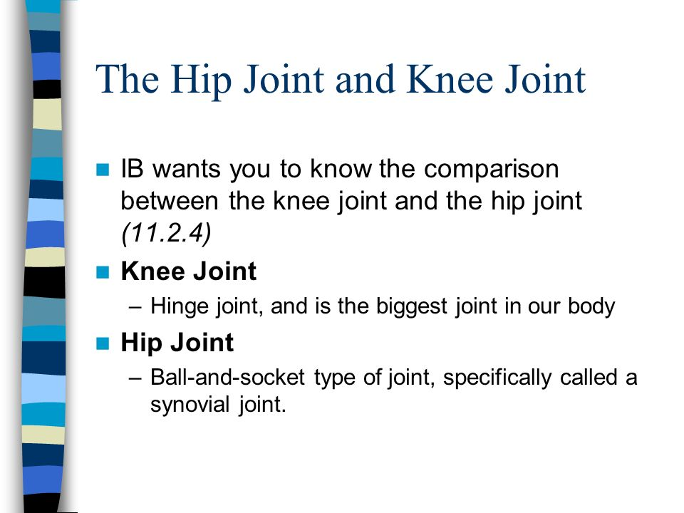 The Hip Joint and Knee Joint IB wants you to know the comparison between the knee joint and the hip joint (11.2.4) Knee Joint –Hinge joint, and is the