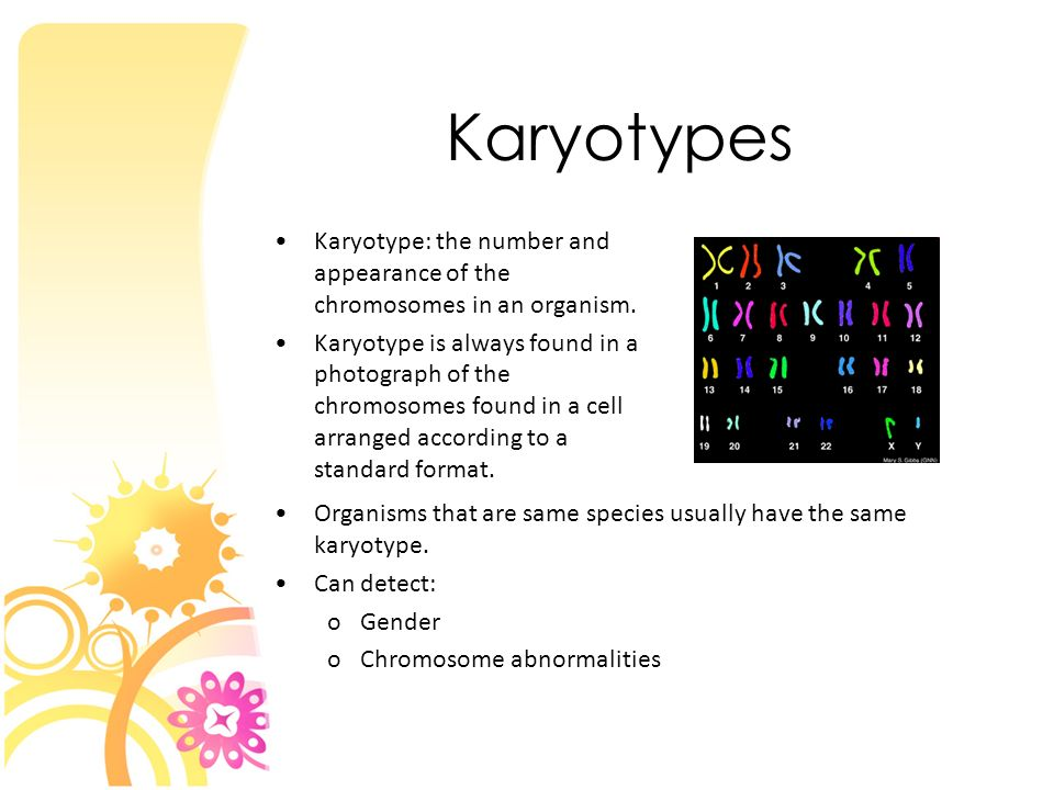 Karyotypes Karyotype: the number and appearance of the chromosomes in an organism.