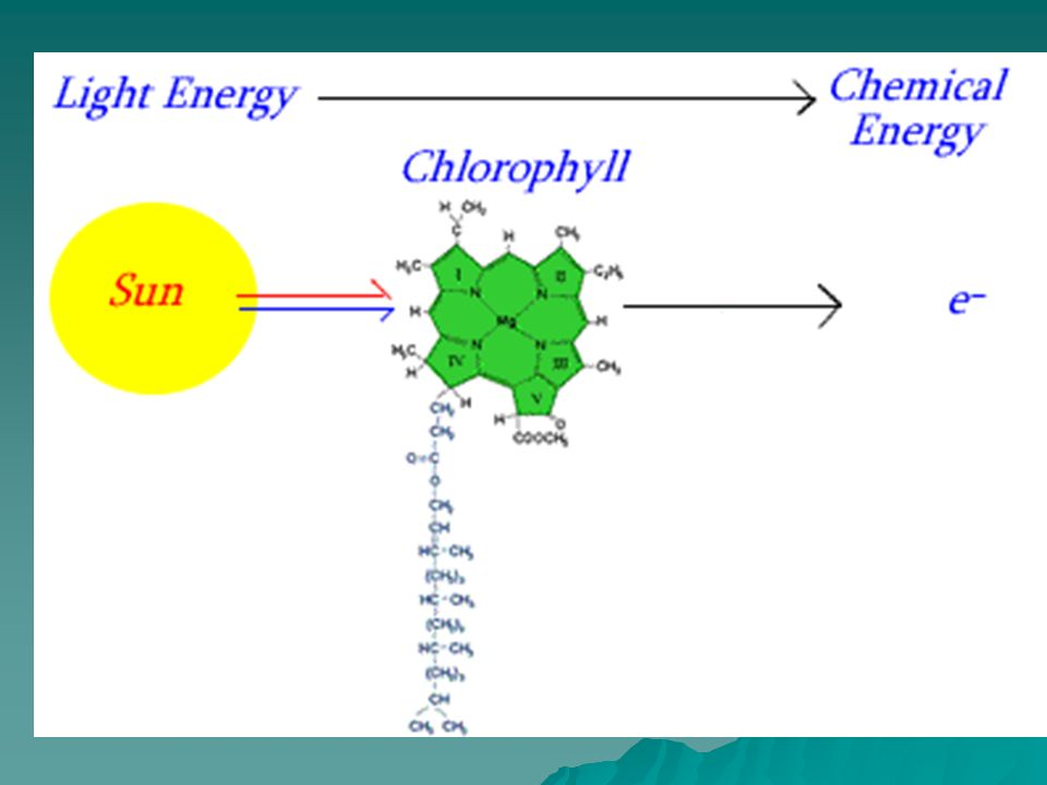 Light Dependent Reaction Energy of sun is trapped by chlorophyll molecules (oxidation) Energy of sun is trapped by chlorophyll molecules (oxidation) Photon energy is used to raise the energy of electrons which escape the chlorophyll (oxidation) Photon energy is used to raise the energy of electrons which escape the chlorophyll (oxidation) This energy is coupled to the reduction of ADP to ATP and the coenzyme NADP+ is reduced to NADPH + H+.