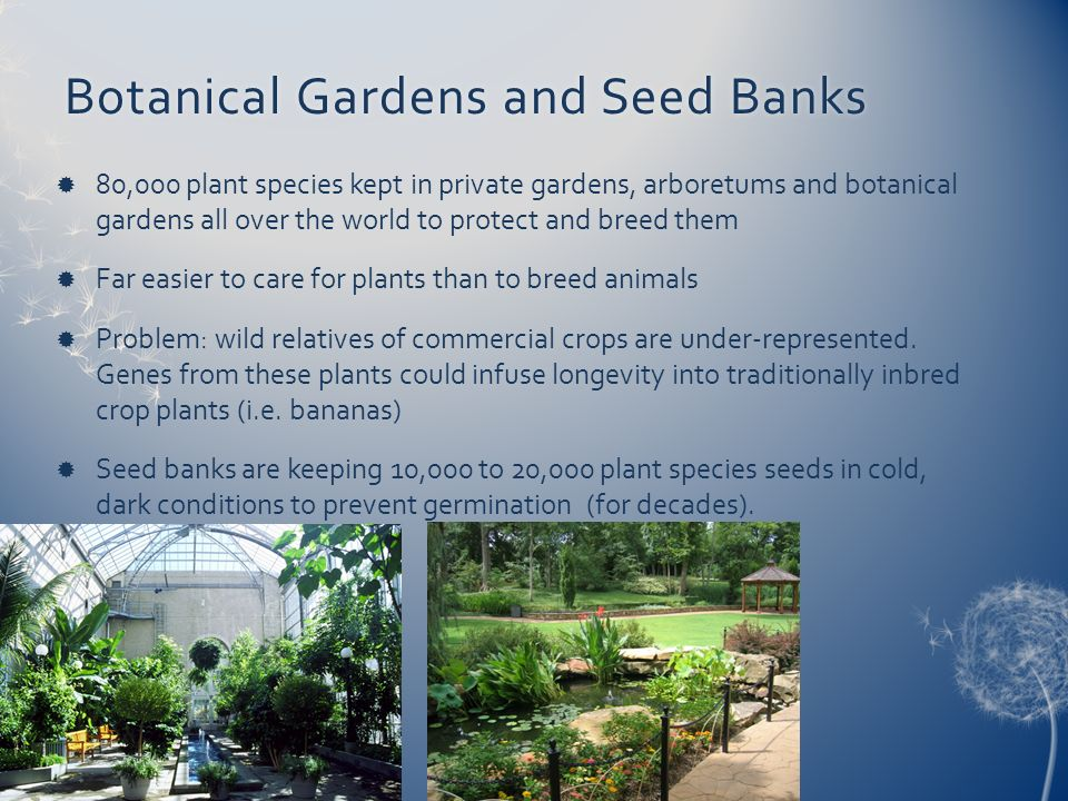 Botanical Gardens and Seed BanksBotanical Gardens and Seed Banks 80,000 plant species kept in private gardens, arboretums and botanical gardens all ov