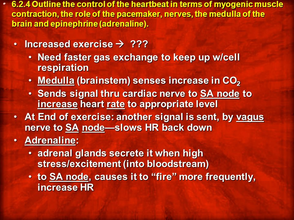 6.2.4 Outline the control of the heartbeat in terms of myogenic muscle contraction, the role of the pacemaker, nerves, the medulla of the brain and ep