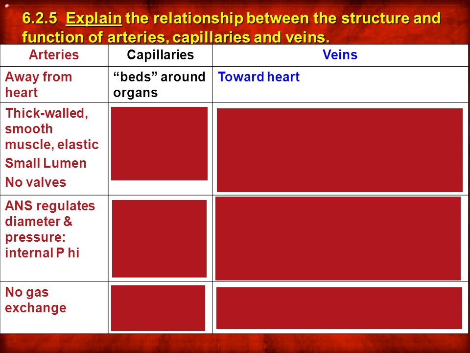 6.2.5 Explain the relationship between the structure and function of arteries, capillaries and veins. ArteriesCapillariesVeins Away from heart beds ar