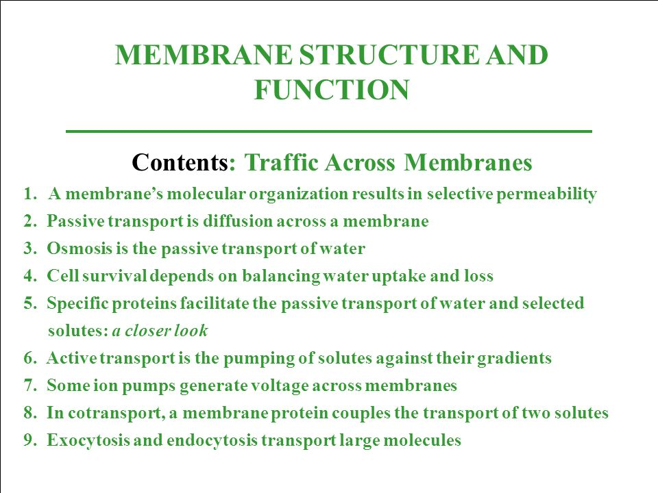 MEMBRANE STRUCTURE AND FUNCTION Contents: Traffic Across Membranes 1.A membranes molecular organization results in selective permeability 2. Passive t