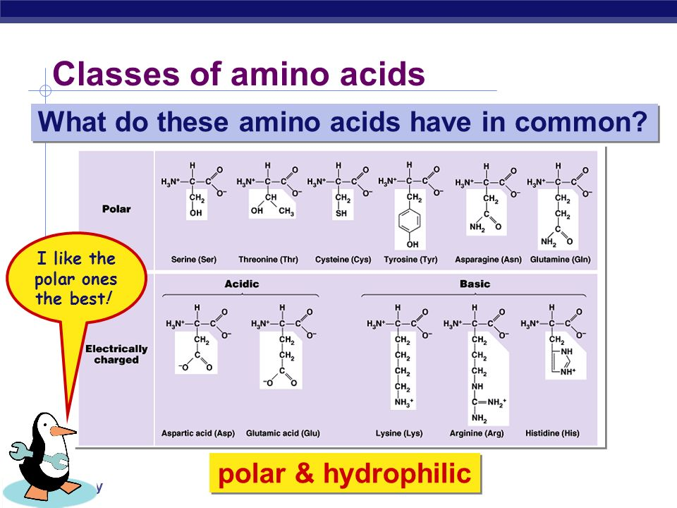 AP Biology Classes of amino acids What do these amino acids have in common? nonpolar & hydrophobic